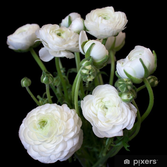 Fiori Bianchi Bouquet.Bouquet Of White Ranunculus Flowers Wall Mural Pixers We Live