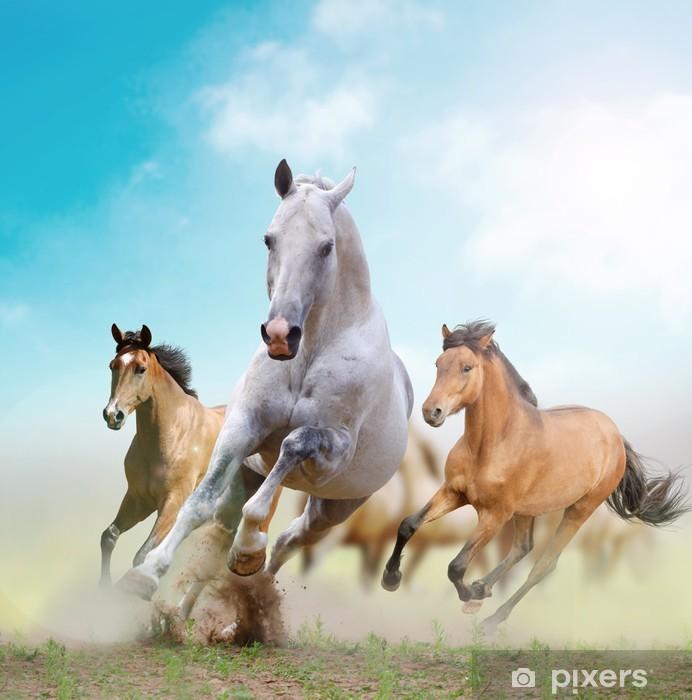 Fototapeta winylowa Konie -