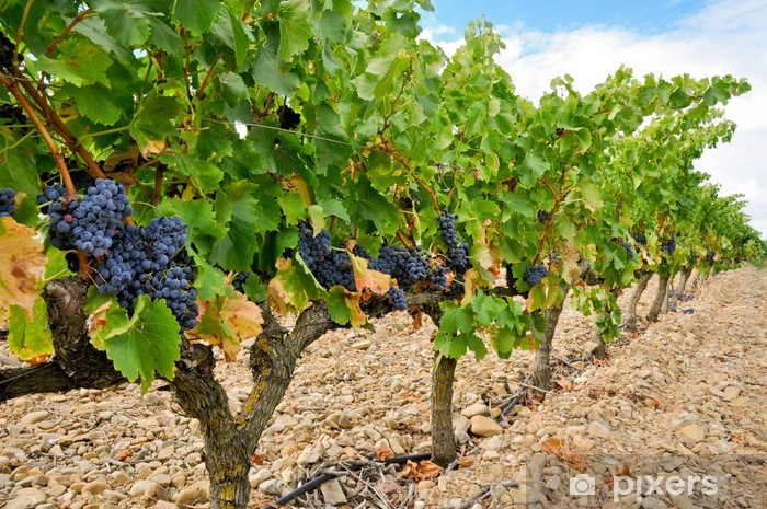 Grapes in a vineyard, La Rioja (Spain) Vinyl Wall Mural - Themes