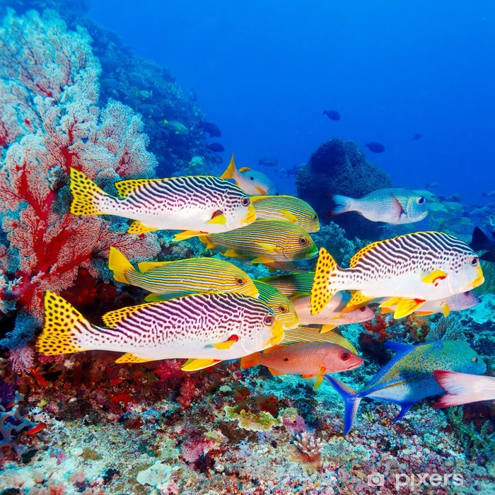 Tropical Fishes near Colorful Coral Reef Pixerstick Sticker - Coral reef