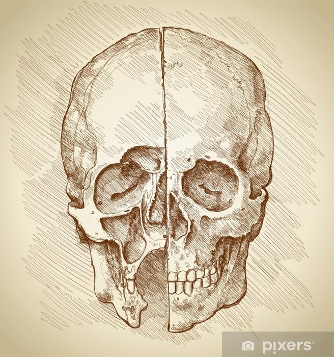 Vinyl Fotobehang Schedel. Sectie. Gebaseerd op tekening van Leonardo da Vinci - Gezondheid en Geneeskunde