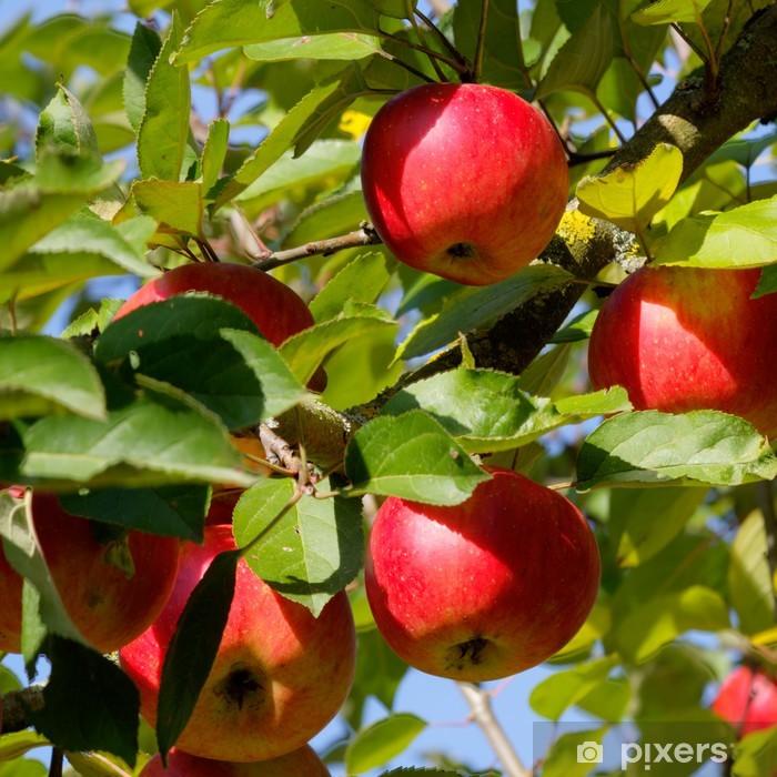 Sticker Pixerstick Kaiser-Wilhelm-Äpfel - Fruits