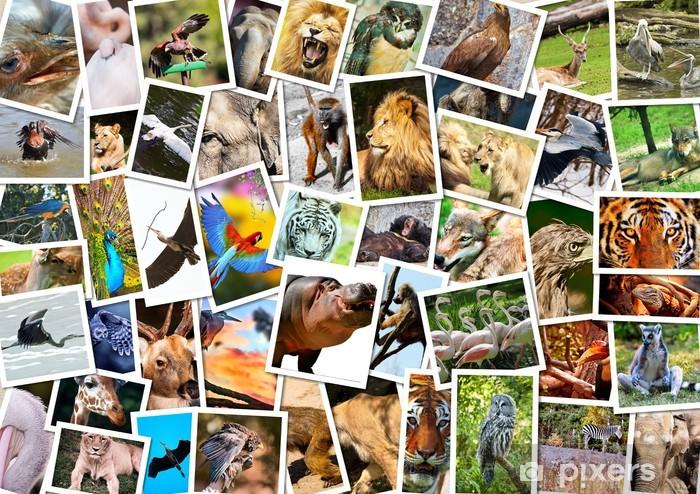 Naklejka Pixerstick Kolaż różnych zwierząt - Ssaki
