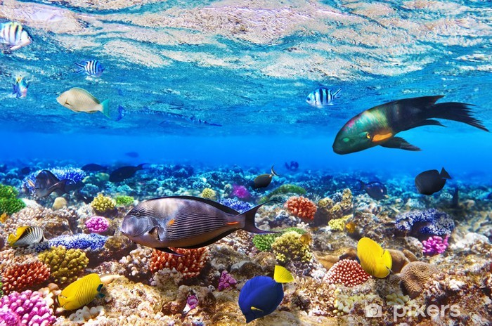 Coral and fish in the Red Sea.Egypt Washable Wall Mural - Themes