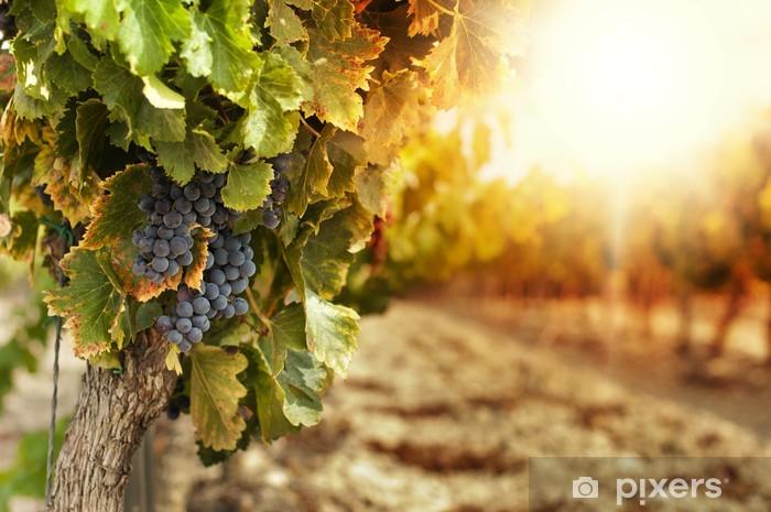 Vineyards at sunset Pixerstick Sticker - Themes