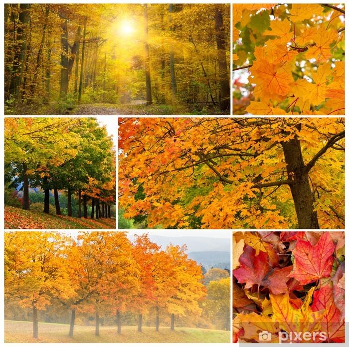 Nálepka Pixerstick Podzimní les - Roční období