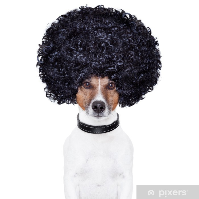 Aufkleber Afro Look Haar Hund Lustig Pixers Wir Leben Um Zu