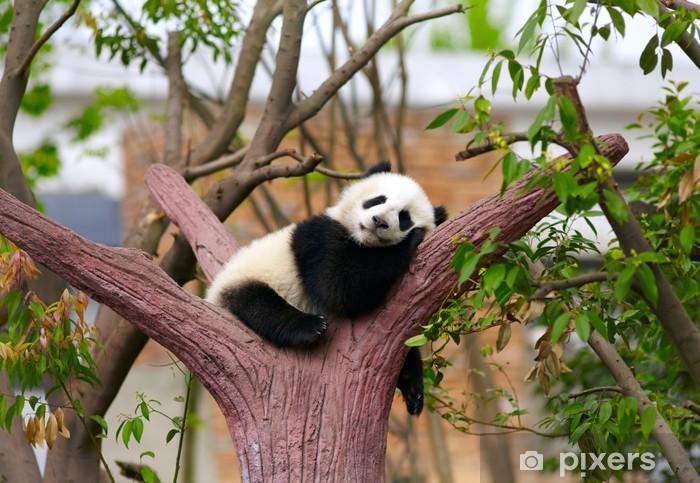 Fototapeta winylowa Panda dziecko śpi - Tematy