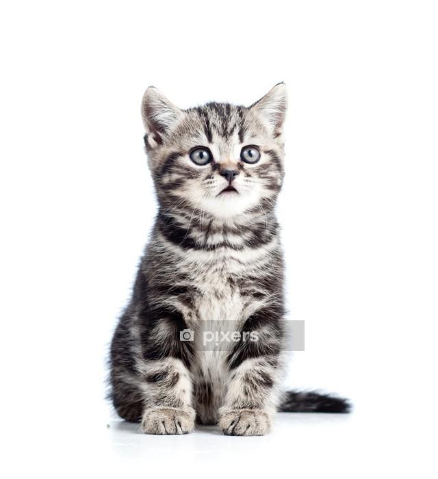 Muursticker Schattige zwarte kitten kat geïsoleerd op wit - Zoogdieren