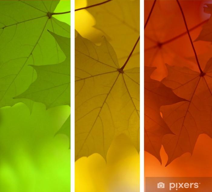 Vinylová fototapeta Maple podzim - Vinylová fototapeta
