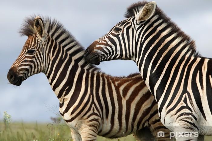 Papier peint vinyle Zebra maman et son poulain - Thèmes
