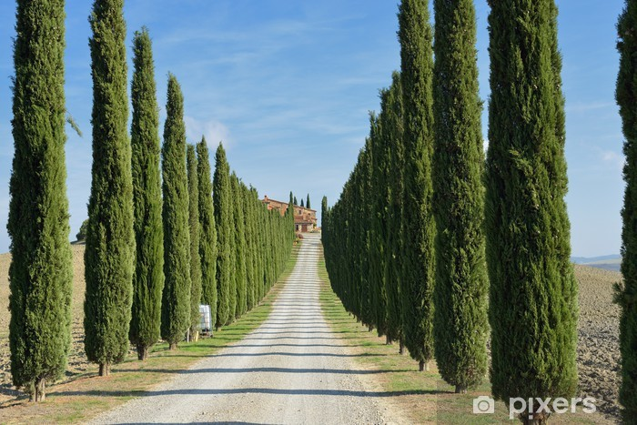 Vinylová fototapeta Tuscan krajina - Vinylová fototapeta