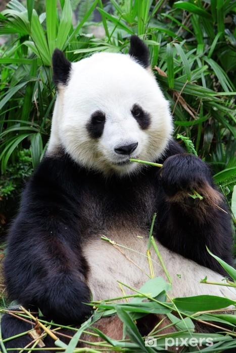 Fototapete Riesigen Pandabaren Essen Bambus Pixers Wir Leben