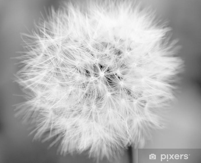 Fototapeta winylowa Mono Dandelion - Przeznaczenia