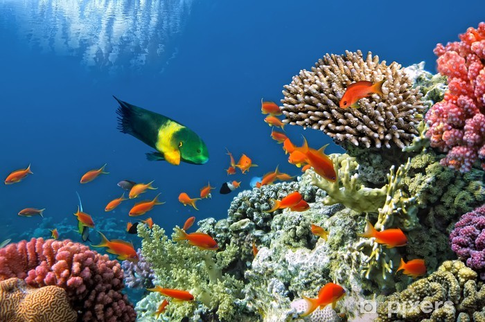 Tropical Fish on Coral Reef in the Red Sea Pixerstick Sticker - Themes