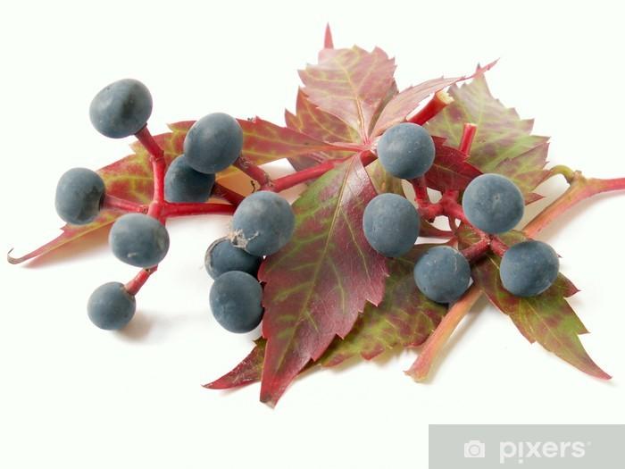 Naklejka Pixerstick Bluszcz - Rośliny