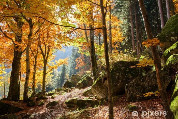 Fototapeta samoprzylepna Las jesienią - Tematy