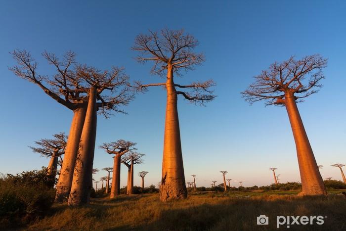 Vinyl Fotobehang Baobab alley, Madagaskar - Thema's