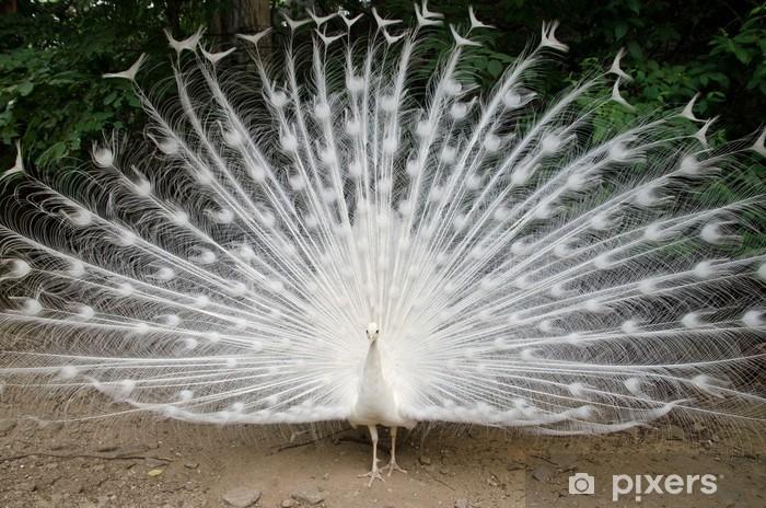 Fototapeta winylowa Paw - Ptaki