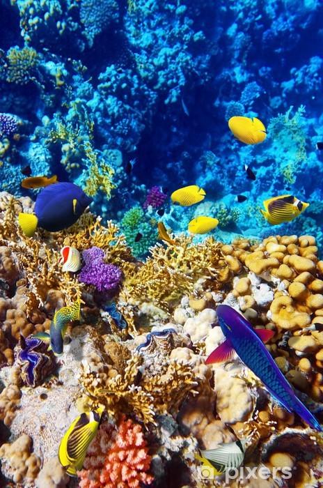 Fototapeta winylowa Koral i ryb w morzu czerwonym. Egipt, Afryka. - Ryby