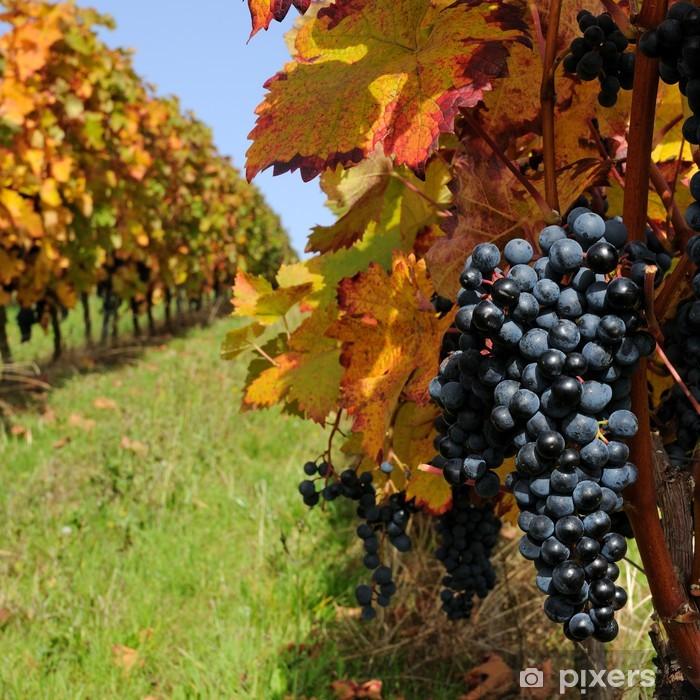 Papier peint vinyle Vignoble en automne - Saisons