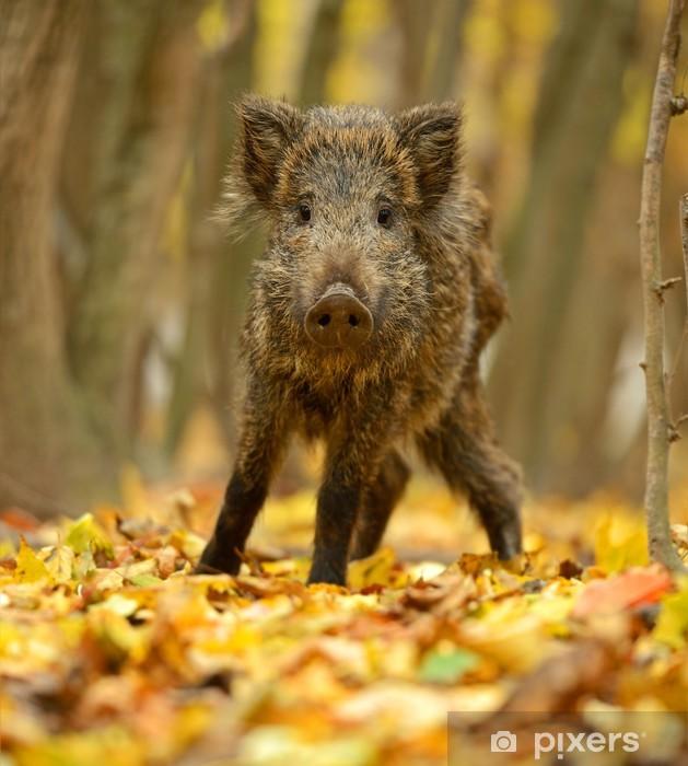 Wild pig Pixerstick Sticker - Mammals