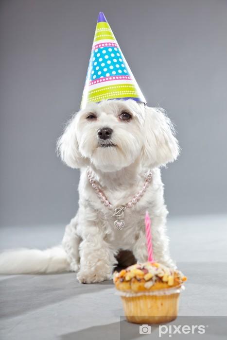 Sticker Grappige Maltese Verjaardag Hond Met Taart En Hoed Studio