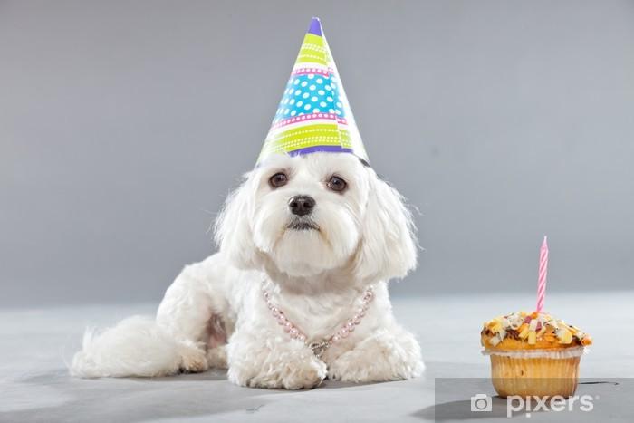 sticker grappige maltese verjaardag hond met taart en hoed. studio