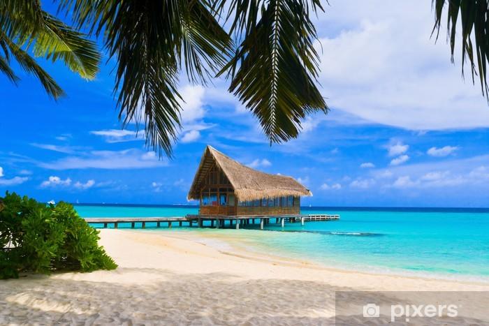 Fototapeta winylowa Klub nurkowy na tropikalnej wyspie - Palmy