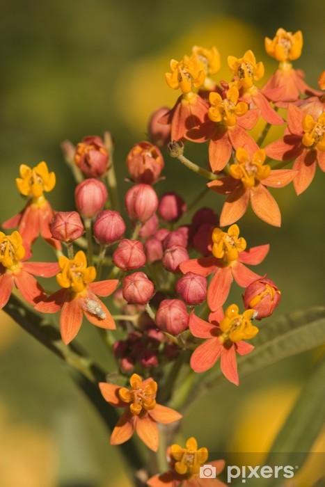 Orange flowering shrub late summer Pixerstick Sticker - Home and Garden