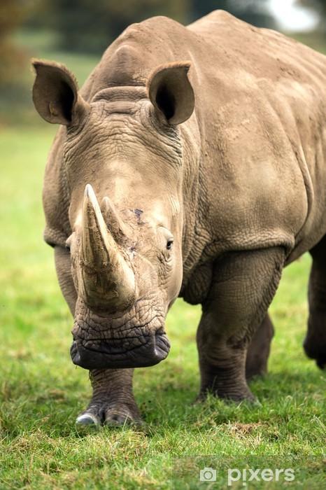 Vinyl Fotobehang Charging Rhino - Zoogdieren