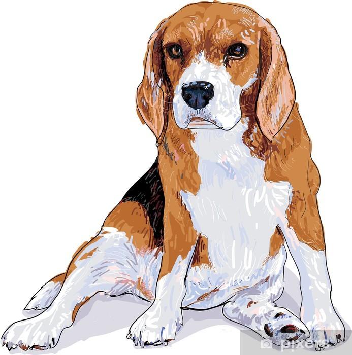 Vinyl Fotobehang Beagle - Zoogdieren