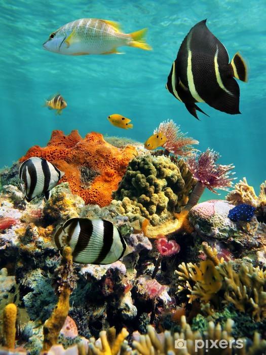 Fototapeta samoprzylepna Rafa koralowa i tropikalnych ryb z powierzchni wody - Rafa koralowa