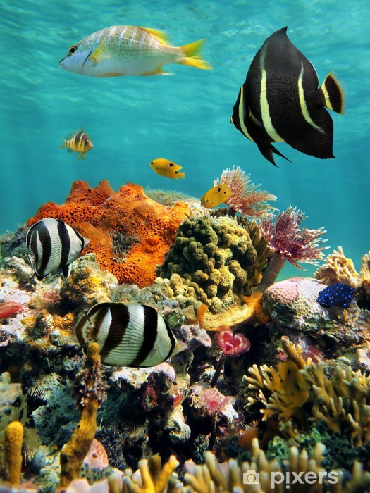 Vinilo Pixerstick Arrecifes de coral y peces tropicales en la superficie del agua - Arrecife de coral