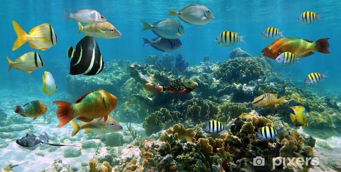 Fotomural Estándar Panorama de un arrecife de coral con el bajío de pescados - Arrecife de coral