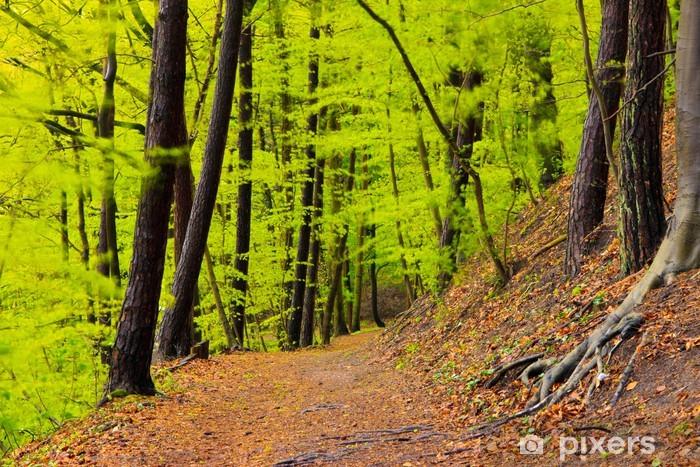 Papier peint vinyle Paysage de forêt au printemps après la pluie. Feuillage vert. -