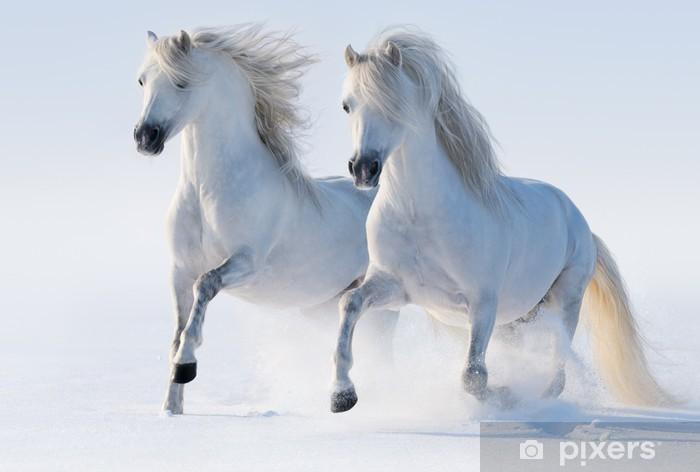 Fototapeta winylowa Dwa galopujący śnieżnobiałe konie - Tematy