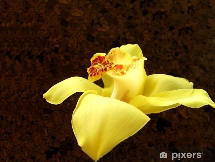 Nálepka Pixerstick Cymbidium - Květiny