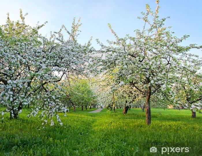 Fotomural Estándar Blooming manzanos en el cielo azul brillante en el parque de la primavera - Manzanos