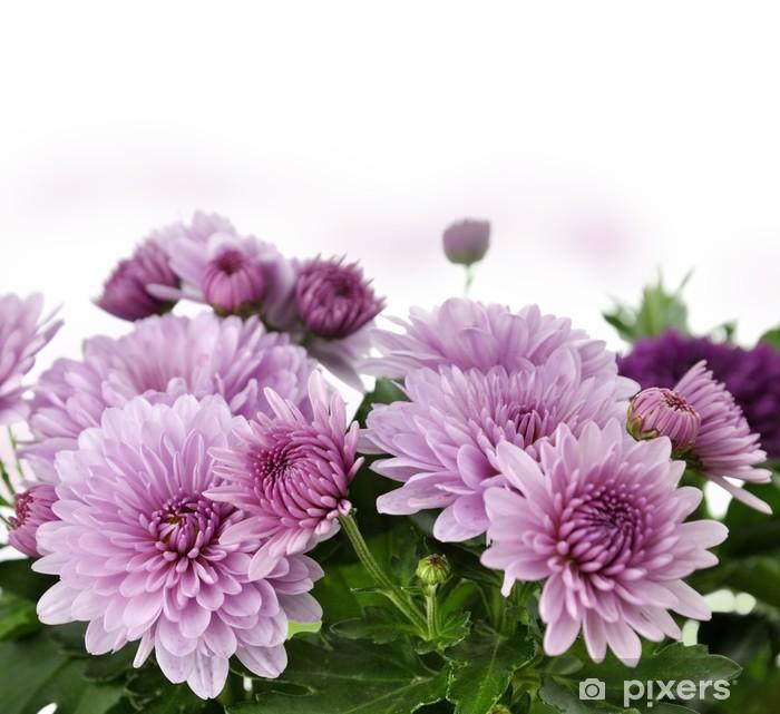 Vinyl-Fototapete Mum Blumen - Blumen