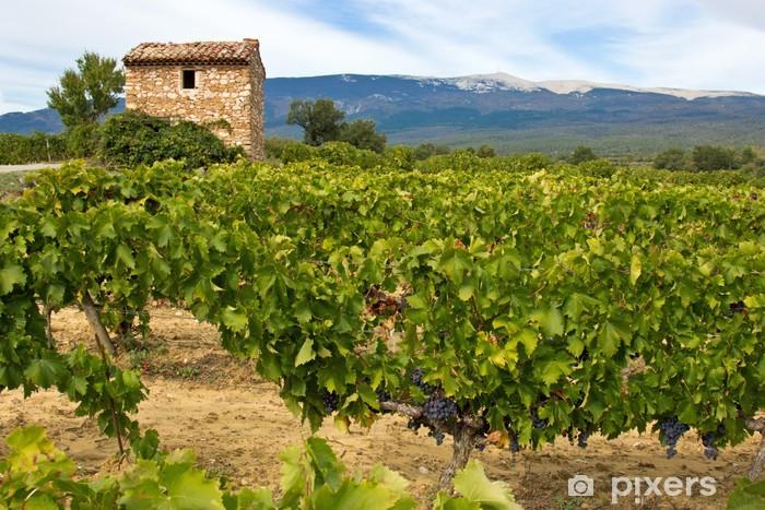 Champ De Vigne cabanon dans un champ de vigne wall mural • pixers® • we live to change