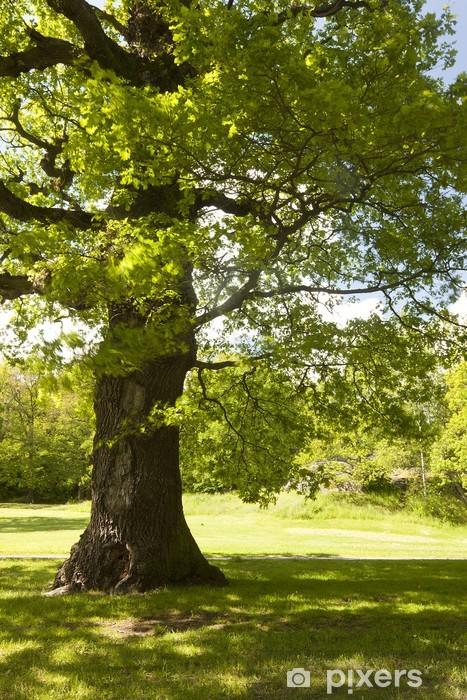 Papier peint vinyle Chêne unique dans le parc ensoleillé - Arbres