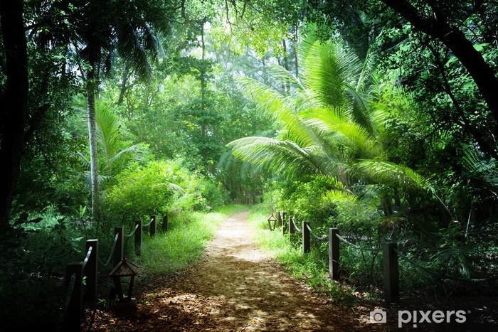 Kendinden Yapışkanlı Duvar Resmi Seyşeller Adaları ormanda yolu - Doğa