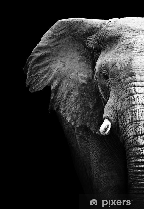Elephant Close Up Pixerstick Sticker - Styles