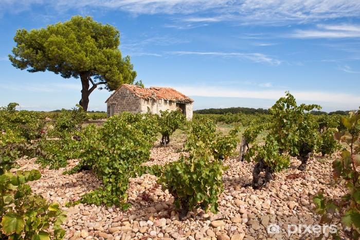 Champ De Vigne cabanon et pin dans un champ de vigne wall mural • pixers® • we live