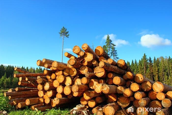 Fototapeta winylowa Kłody w logowaniu - Drzewa