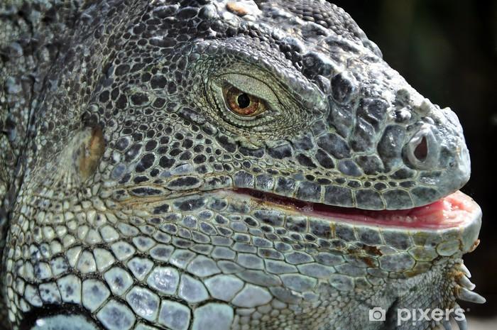 Sticker Pixerstick Gros plan portrait d'un iguane - Thèmes