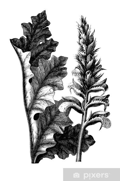 papier peint plante acanthus pixers nous vivons pour changer. Black Bedroom Furniture Sets. Home Design Ideas