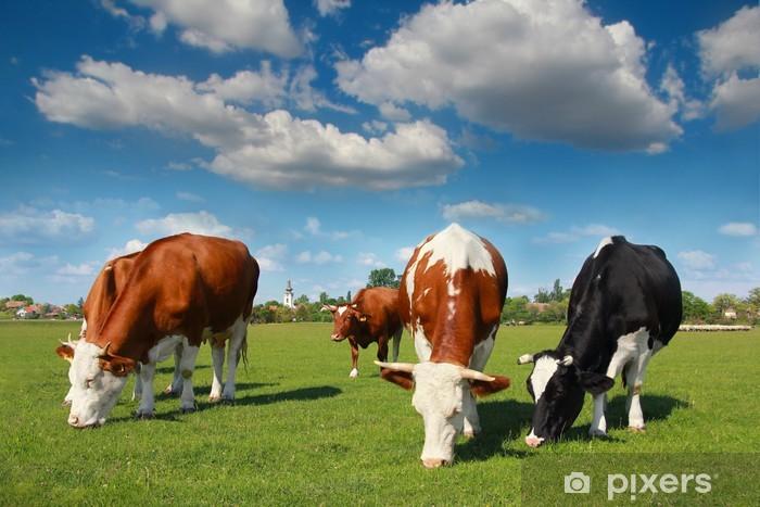 Sticker Pixerstick Vaches qui paissent dans les pâturages - Ciel