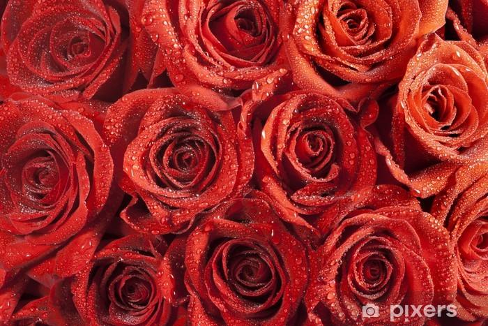 Fototapeta winylowa Ciemne czerwona róża z krople wody - Kwiaty